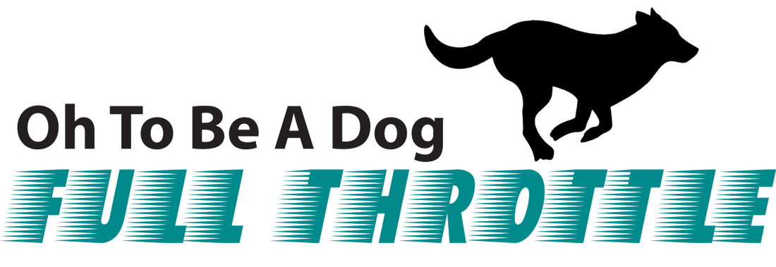 Full Throttle Is A Monthly Membership For Dogs That Need More Than Your Average Walk High Energy Breeds Such As Labs Border Collies Aussies Etc